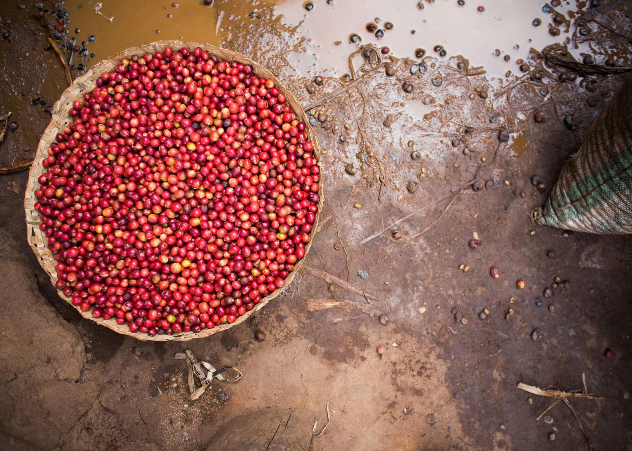 http://redstrandcoffee.com/wp-content/uploads/2019/11/Mutana-2-1.jpeg