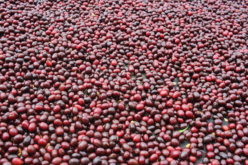 https://redstrandcoffee.com/wp-content/uploads/2019/11/bolivia2.jpg